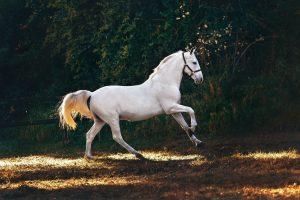 Piękno warte miliony – najdroższe rasy koni na świecie