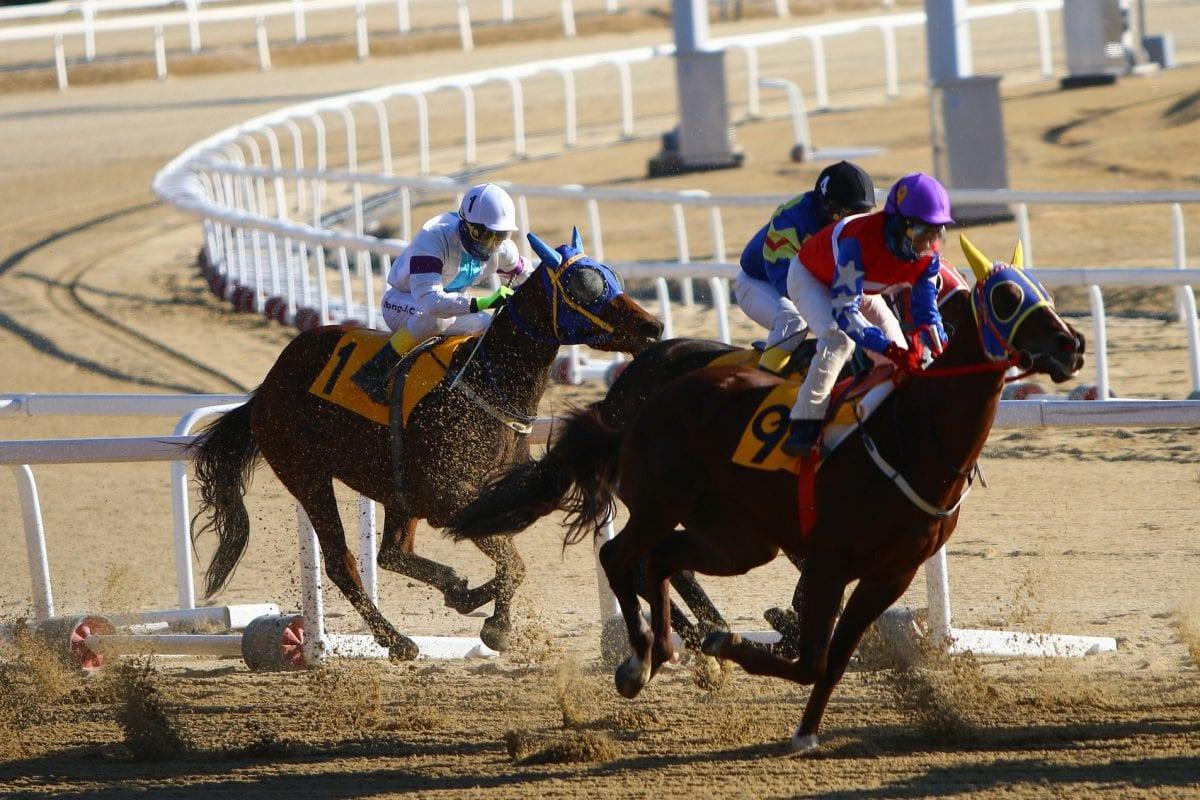 Koszt utrzymania i treningu konia wyścigowego szlachetnej krwi