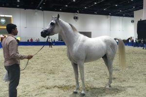 Jak przebiegają prestiżowe aukcje koni?